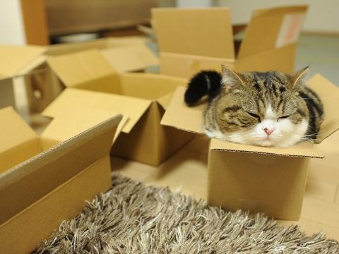 Big Cat Small Box